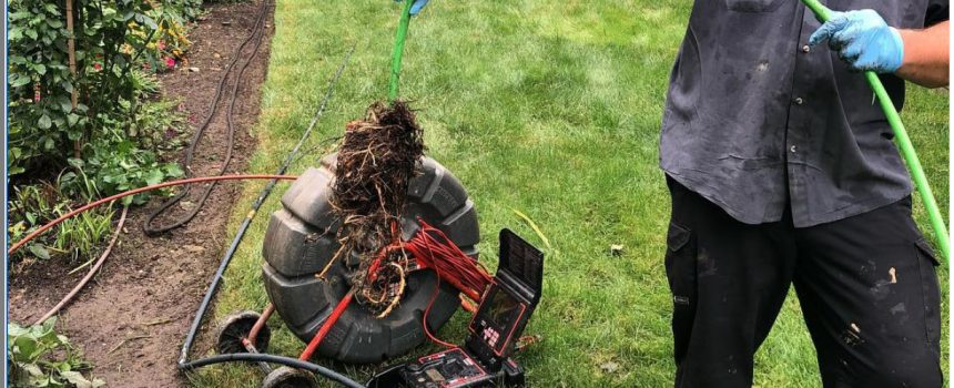 Sewer Root Intrusion